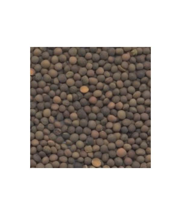 Καναβούρι - 3 kg